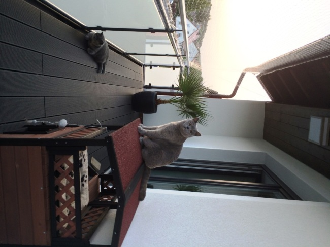 Diy Cat Safe Balcony With A Cat Net The Daily Nerdism